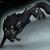 :iconbrasswolf5914: