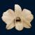:iconbroken-orchid: