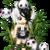 :iconbubblez-and-pandas: