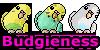 :iconbudgieness:
