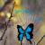 :iconbutterflyonaweb: