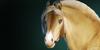 :iconcalipso-sport-horse: