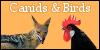 :iconcanidsandbirds: