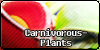 :iconcarnivorous-plants: