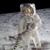 :iconcatsinspace7: