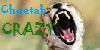 :iconcheetah-crazy: