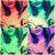 :iconchihuahuagirl10: