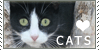 :iconchillax-kittycats: