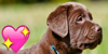 :iconchocolate-lab-lovers: