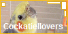 :iconcockatiellovers: