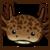 :iconcolorado-beetle:
