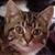 :iconcookiecat-plz:
