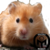 :iconcopperhamster: