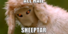 :iconcourt-of-sheeptar: