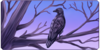 :iconcreative-crow-adopts: