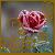 :iconcrystalrose999: