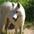 :iconcrywolf88: