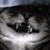 :iconcursed-kitten: