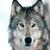 :iconcutecuddlywolfie: