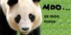:iconda-mooin-pandas: