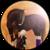 :icondancing-ponies: