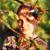 :icondark-lavender: