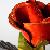 :icondarkrose03281: