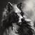 :icondarkwolf-art: