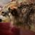 :icondelusionedwolf: