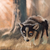 :icondemonicwolfpup: