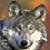 :icondenrawaterwolf: