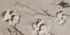 :iconder-strandhund:
