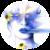 :icondiamondspider: