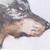 :icondiardiwolf: