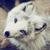 :icondimondwolf73: