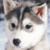 :icondogplz: