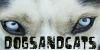 :icondogsandcats: