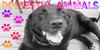 :icondomestic-animals: