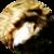 :icondoofusaurus: