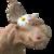 :icondragonosaurus-rex: