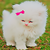 :icondreams-cat: