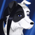 :iconduffcollie: