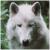 :icondutch-wolf: