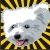 :icone1k1ch1: