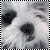 :icone-hoshi: