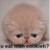 :iconeasy468: