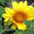 :iconeatin-yellow-flowers: