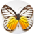 :iconedris-kingfisher: