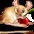:iconeeveegirl12553:
