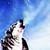 :iconegwolf65: